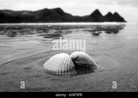 Cockle Shell on the sand 'Three Cliffs Bay' 'Gower peninsula', Wales - Stock Photo