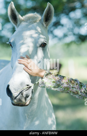 Woman touching horse, cropped view, close-up - Stock Photo