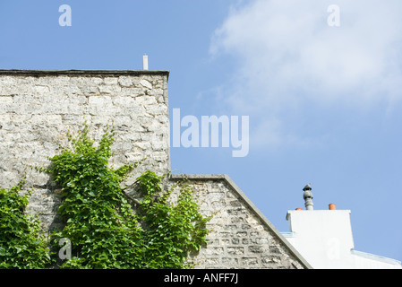 Vine growing on side of building - Stock Photo