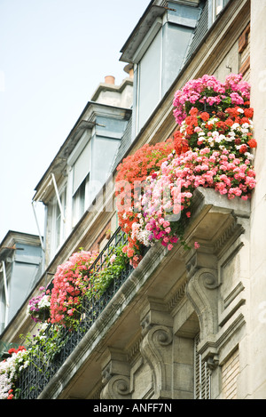 Flowers in window boxes, low angle view - Stock Photo