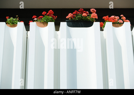 Geraniums in window boxes - Stock Photo