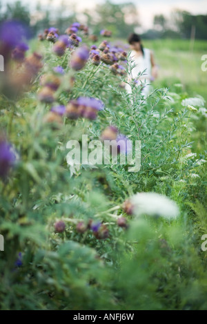 Young woman in garden in blurred mid distance, focus on thistle flowers