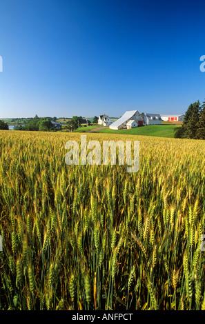 Farm in Rusticoville, Prince Edward Island, Canada. - Stock Photo