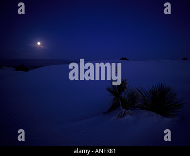 Soap Yucca in Desert under Full Moon, White Sands National Monument, New Mexico, USA - Stock Photo