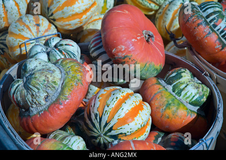 A basket full of colorful strange shape squashs looking like mushroom Montreal QC Canada - Stock Photo