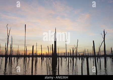 Dead trees rising from the waters of the Brokopondo reservoir in the interior of Suriname - Stock Photo