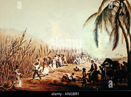 Bettys Hope Antigua Sugar Mill Slaves - Harvesting Cane 19 Century Painting In Bettys Hope Museum - Stock Photo