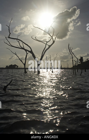 Dead trees rising from the waters of the Brokopondo reservoir in the interior of Suriname. - Stock Photo