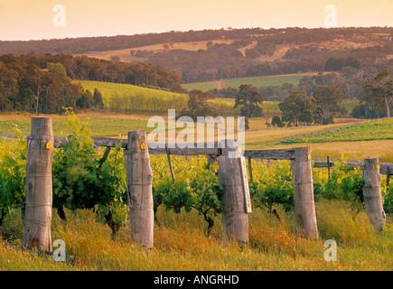 Vineyard, Margaret River, Western Australia, Australia - Stock Photo