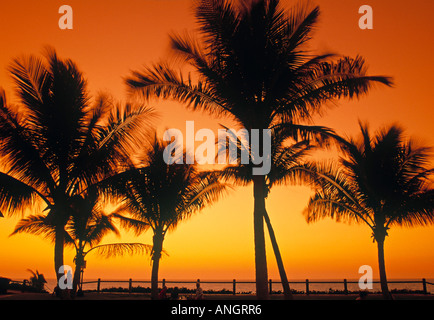 Palm Trees, Cable Beach, Broome, The Kimberley, Australia - Stock Photo