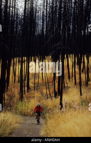 A young woman mountain biking though the burnt forest in Kelowna, British Columbia, Canada. - Stock Photo