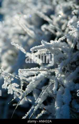 Snowy grass in the sunshine. - Stock Photo
