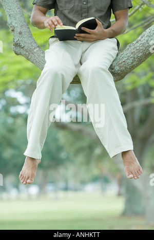 Man sitting in tree reading book with legs dangling, cropped view - Stock Photo