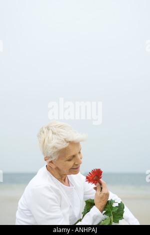 Senior woman holding gerbera daisy, smiling, close-up - Stock Photo