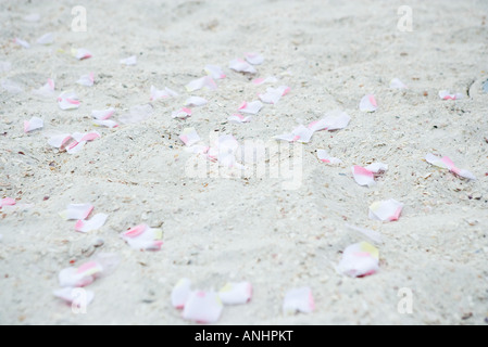 Flower petals scattered on sand, close-up, full frame - Stock Photo