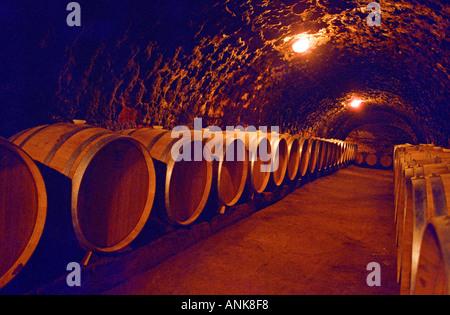 The Oremus winery in Tolcsva, Tokaj: New oak barrels in the underground cellar. Oremus is one of the few who uses - Stock Photo
