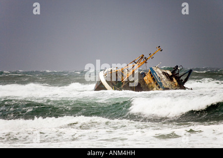 Beached grounded storm wreck of Banff Fishing Vessel boat BF 380 Sovereign aground on rocks at Cairnbulg Point Fraserburgh, - Stock Photo