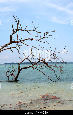 Leafless trees surrounded by shallow sea waters after Tsunami at of Jolly buoy beach Andaman - Stock Photo