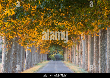 France Languedoc Roussillon Provence Tree Lined avenue - Stock Photo
