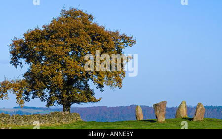 Bronze age stone circle and tree on Harthill Moor near Birchover in the Peak District National Park Derbyshire England - Stock Photo