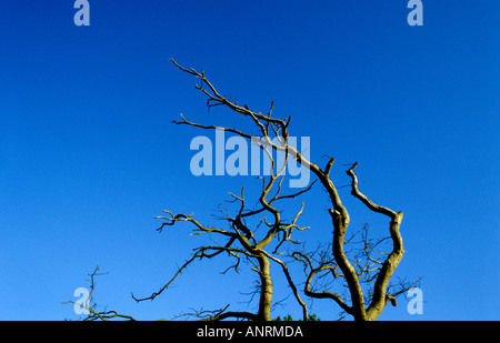 Dead tree with lovely summer blue sky in background - Stock Photo