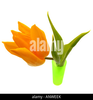 common garden tulip Tulipa gesneriana blooming in a green vase - Stock Photo