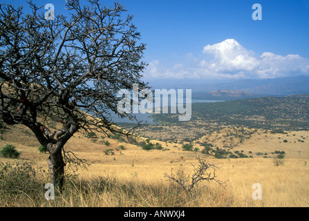 A tree stands high, overlooking the lower grasslands of Ethiopia's Nechisar National Park, Africa - Stock Photo