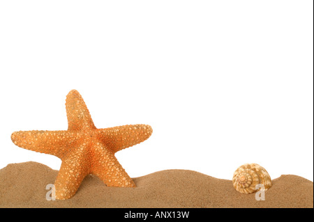Starfish and seashell in the sand lower frame border - Stock Photo