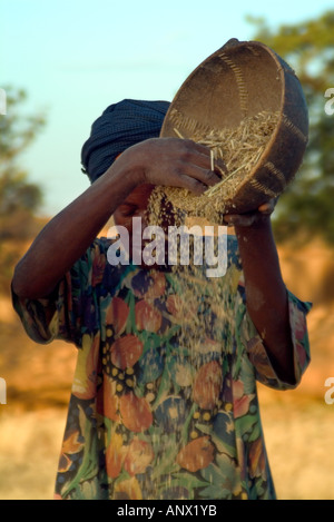 Africa, Mali, Dogon woman sorting grain in the village of Idjeli - Stock Photo