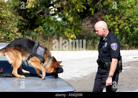 A german shepherd K 9 dog sniffing for drugs on a vehicle while doing a search with a police department officer - Stock Photo