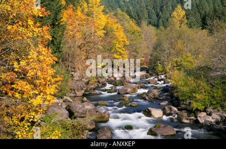 A small mountain stream runs through willows alder and aspen trees turning gold in the autumn in the central Oregon - Stock Photo