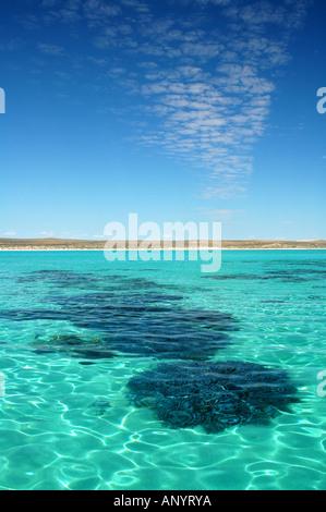 Healthy coral in the lagoon of Ningaloo Marine Park, Western Australia - Stock Photo