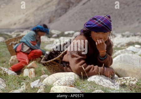 Young TIBETAN WOMEN gather YAK DUNG which they use for fuel on the TIBETAN PLATEAU near NYALAM TIBET - Stock Photo