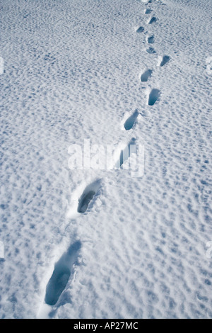 Footsteps in snow Mt Ruapehu Central Plateau North Island New Zealand - Stock Photo