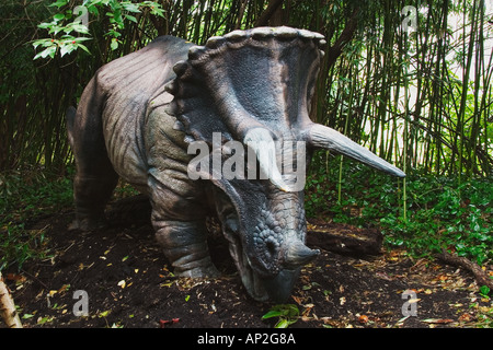Triceratops which means three horned face dinosaur from the late Cretaceous period Goes to a length of 29 5 feet - Stock Photo