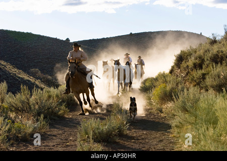 cowboys riding, Oregon, USA - Stock Photo