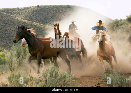 cowboy driving horses, wildwest, Oregon, USA - Stock Photo
