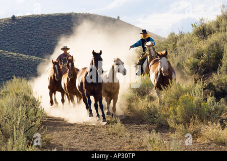 cowboys driving horses, wildwest, Oregon, USA - Stock Photo
