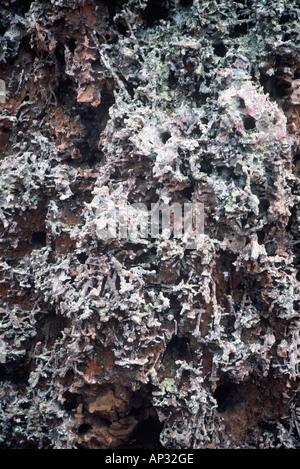 Fossilised worm castes - Stock Photo