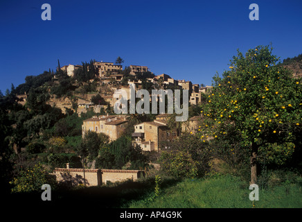 Deya scene with young lady picking oranges in the village town of Deya Deia on West Coast Mallorca. - Stock Photo