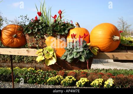pumpkin and flower arrangement - Stock Photo
