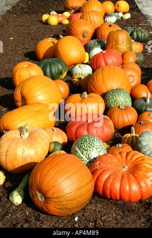 Pumpkin group on the ground - Stock Photo