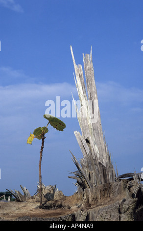 Young shoot growing from cut down tree - Stock Photo