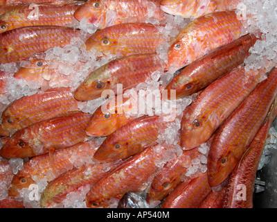 A display of fresh Red Snapper fish on ice in a shop in Puerto de la Cruz Tenerife - Stock Photo