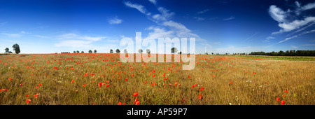 Panoramic Shot Of Poppies In Field With Wind Turbines In Distance East Somerton Norfolk UK - Stock Photo