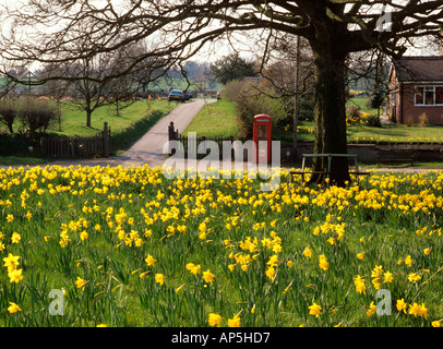 UK Cheshire Congleton K6 phone box at Astbury Green in springtime - Stock Photo