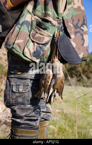 Game shooter with shot and killed song birds _ Dead Thrush Cyprus killed during Mediterranean spring shoot,  EU - Stock Photo