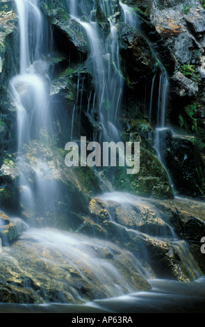 Nancy Brook Scenic Area, White Mountain National Forest. Ferns cling to the rocks next to Nancy Cascades. Waterfalls - Stock Photo