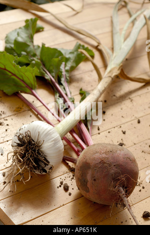beetroot plant and garlic plant freshly picked on light wood surface - Stock Photo