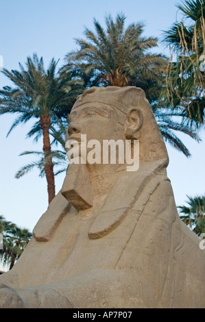 Avenue of Sphinxes, Luxor Temple, Thebes, Upper Egypt, Middle East. DSC 4610 - Stock Photo
